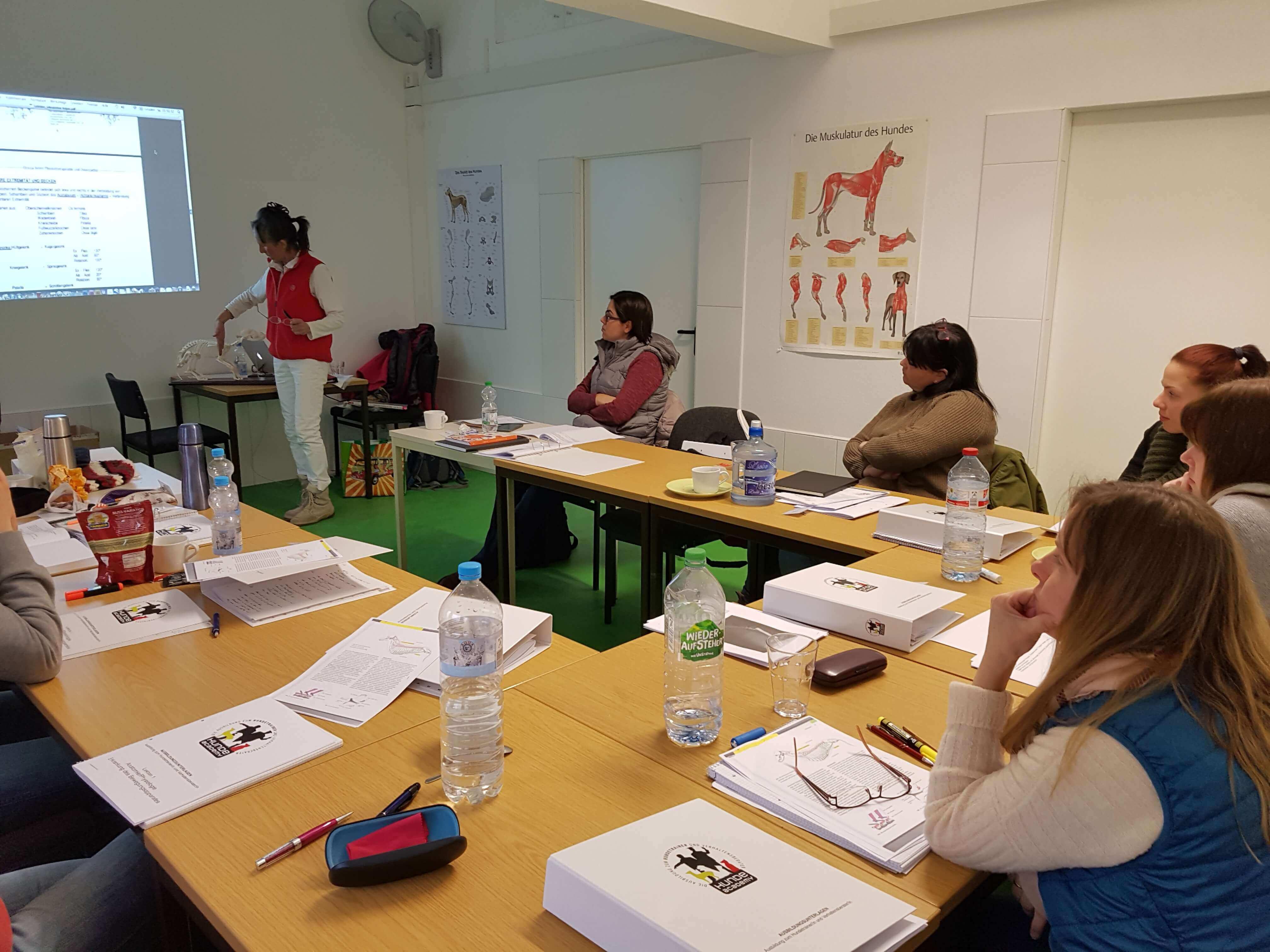 Die Hundeacademy lehrt während der Ausbildung den anatomischen Aufbau eines Hundes. Informieren Sie sich hier!