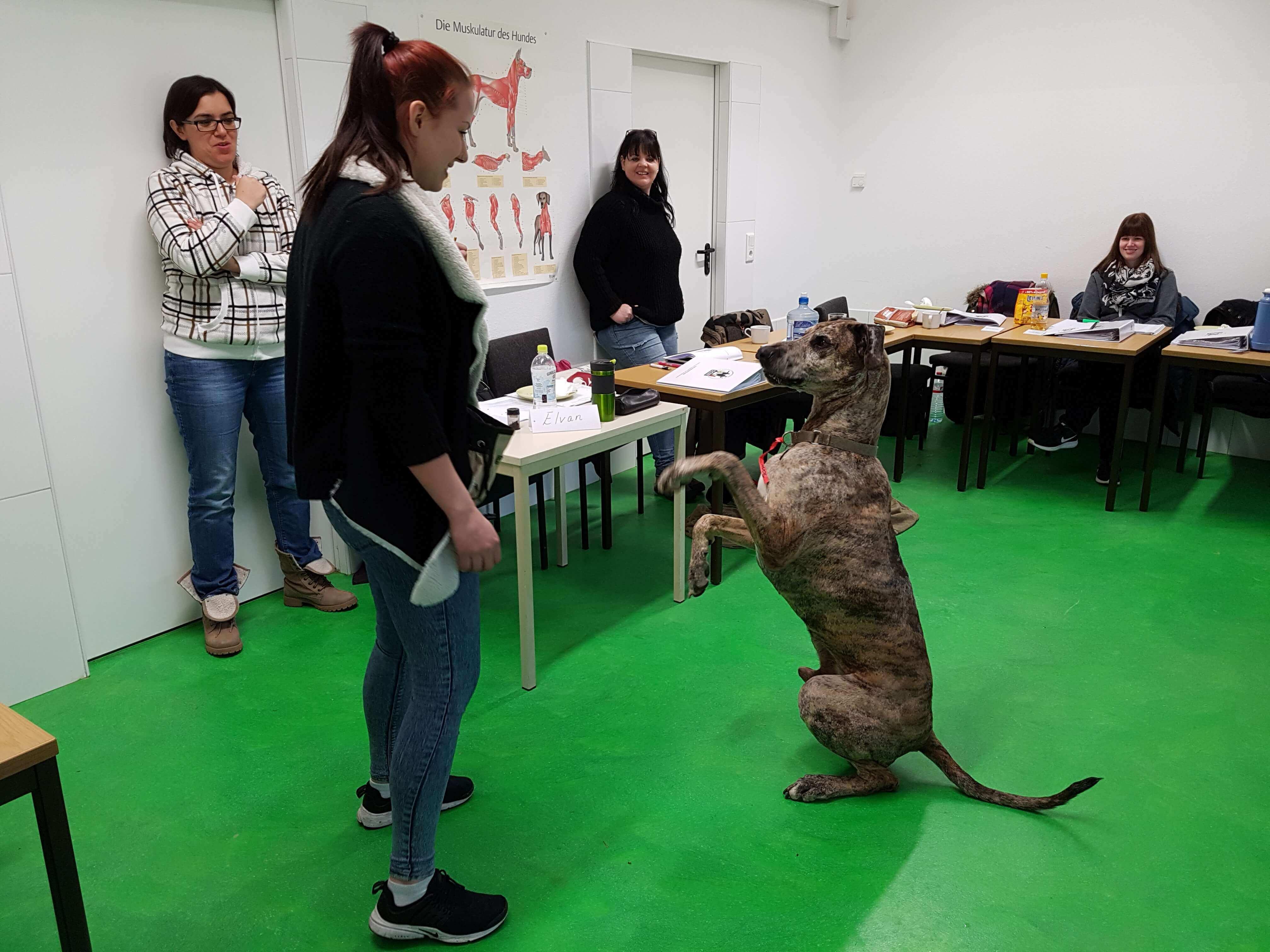 Bei der Hundeacademy in Stuttgart lernt Ihr Hund eine Grunderziehung. Informieren Sie sich hier!