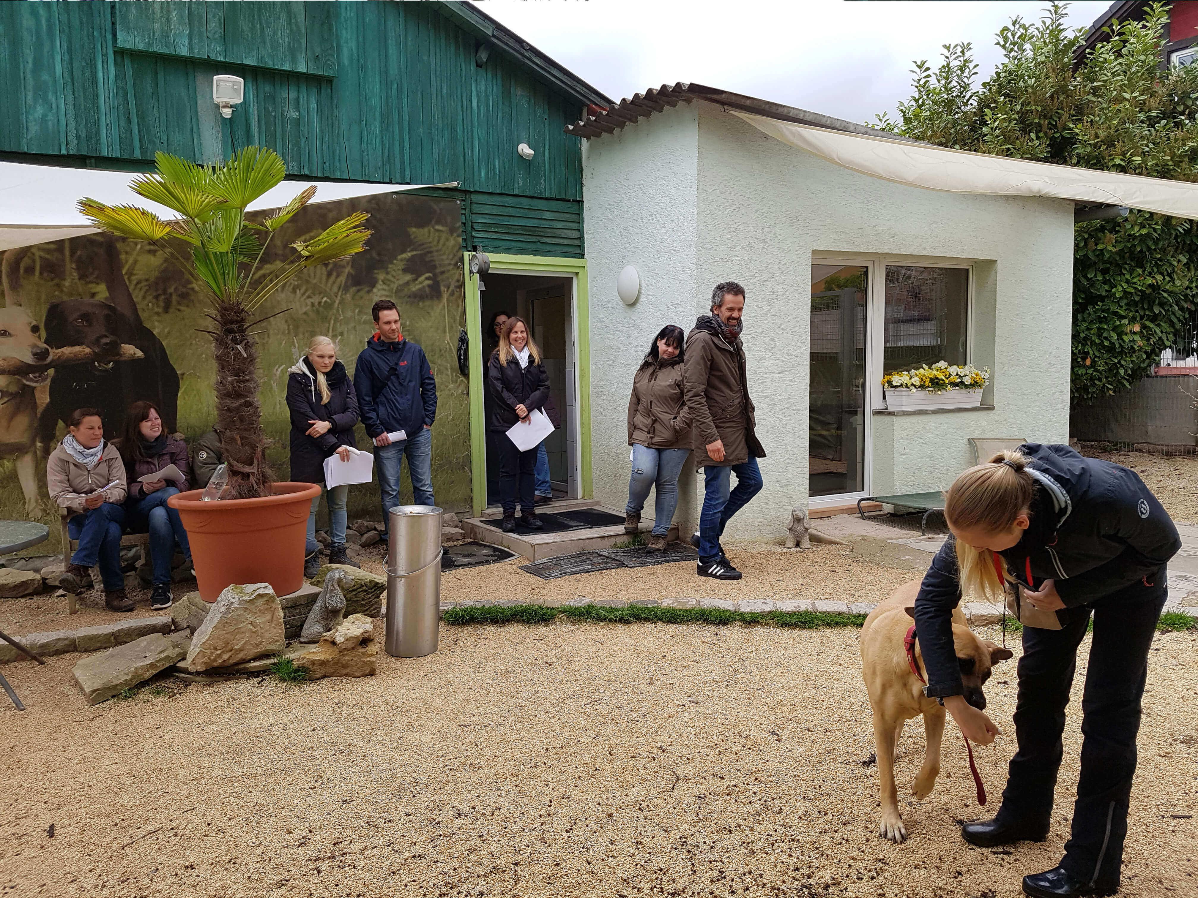 Die Hundeacademy stellt mit Ihnen einen Trainingsplan zusammen. Informieren Sie sich hier!